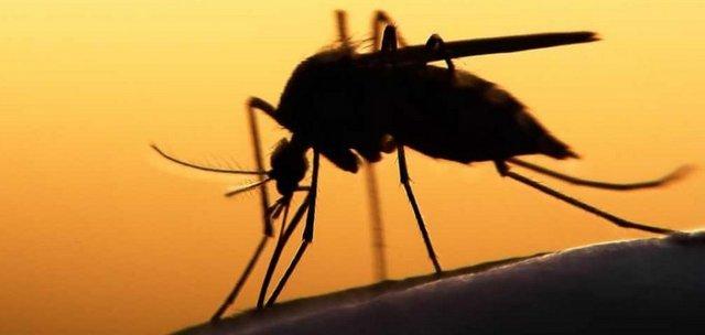 малярія комар